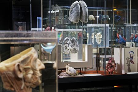 Anatomisch Museum